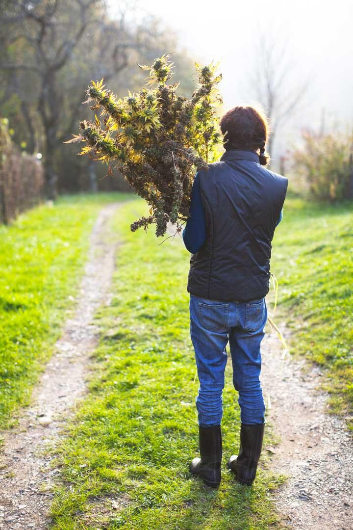 Chi Siamo | Just Canapa | Shop online di Cannabis Legale