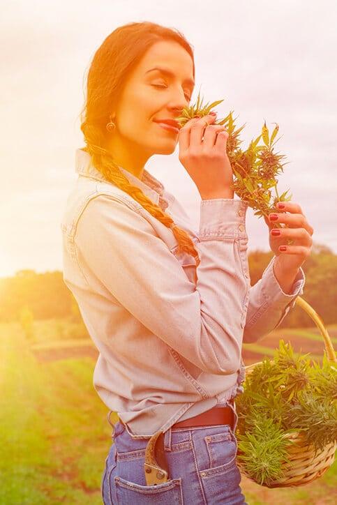 Cannabis Light, Marijuana Legale