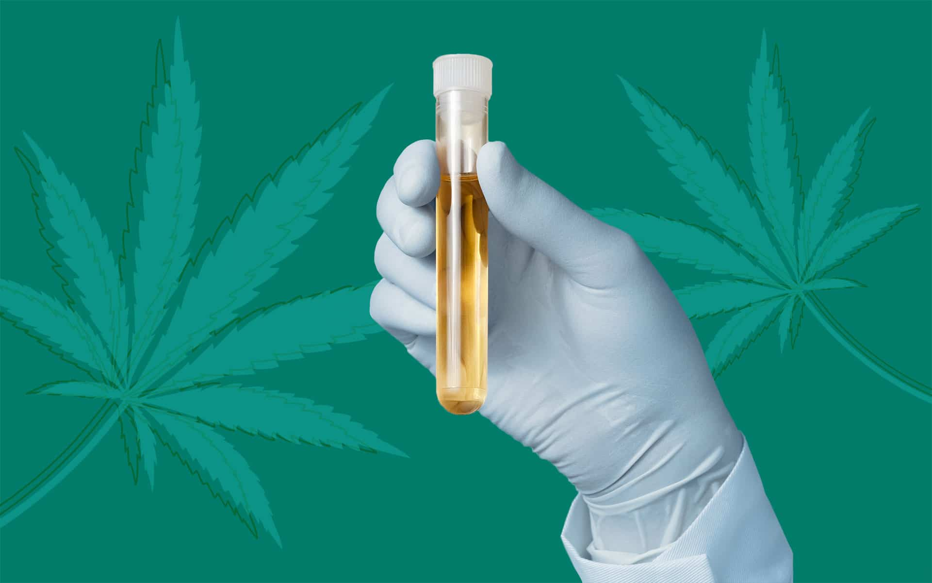 cbd e test antidroga