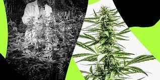cannabis per la cura di stress post traumatici