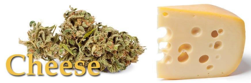 Blue Cheese, marijuana al sapore di formaggio stagionato.jpg