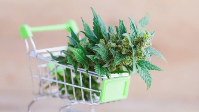 comprare marijuana online, marijuana legale, marijuana online, comprare erba online