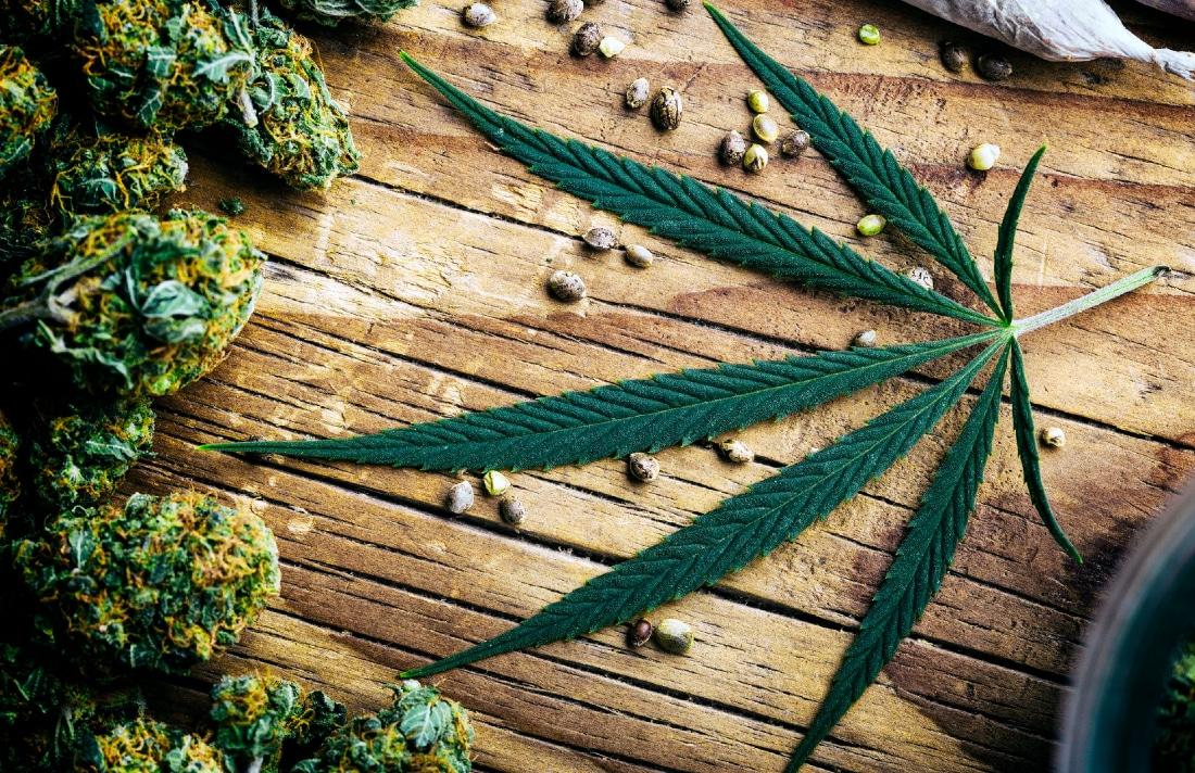 Cbd, Cannabis E Canapa Qual È La Differenza Tra Questi Prodotti?