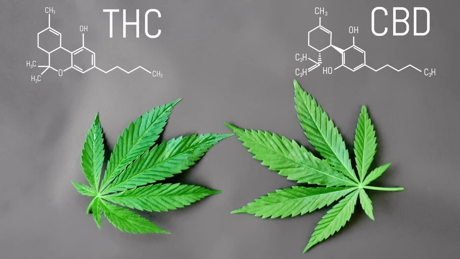 Thc E Il Cbd Presenti Nella Marijuana