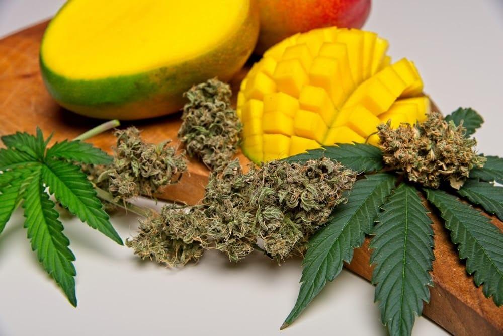 mango haze tra le più potenti varietà di marijuana