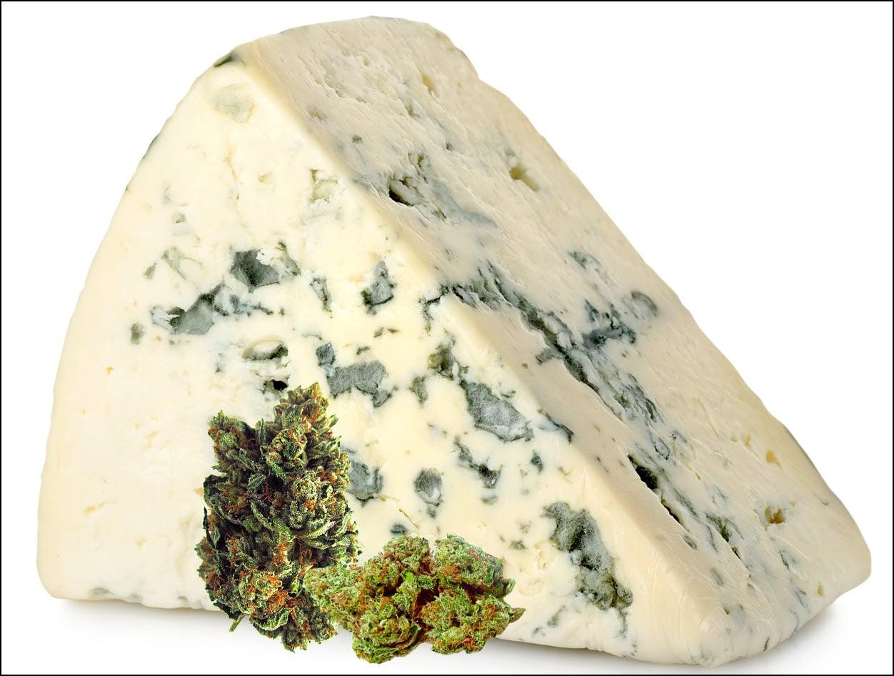 Blue Cheese Weed Perché Alcune Varietà Di Cannabis Odorano Di Formaggio?