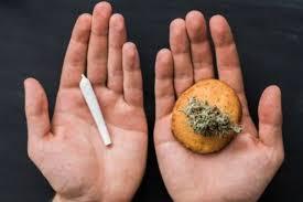 Cannabis Alimentare E Industriale