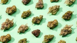 Cannabis Ibrida