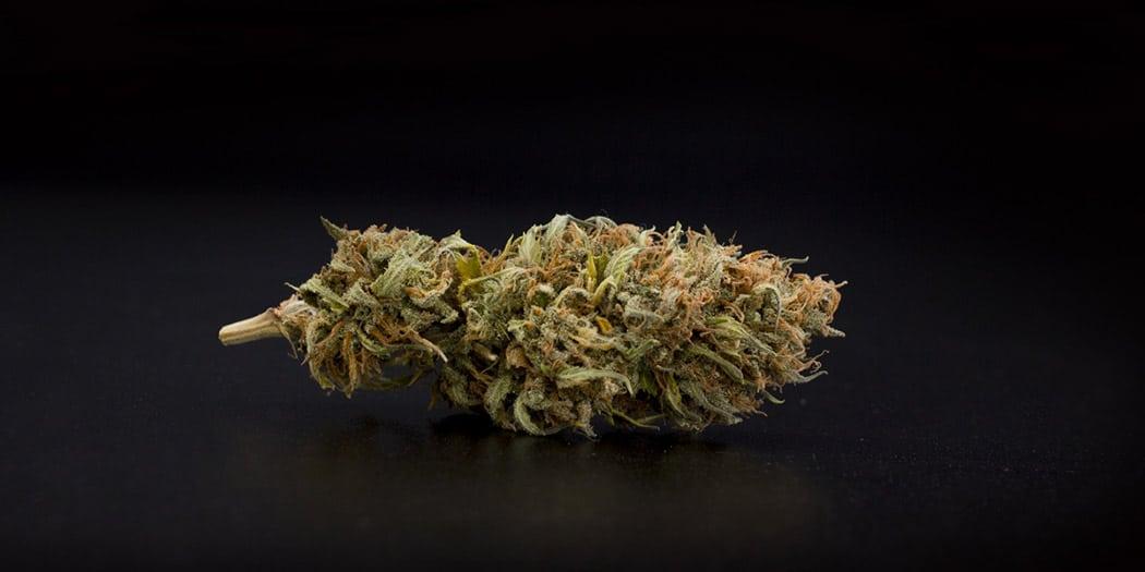 Orange Bud La Cannabis Al Sapore Di Arancia
